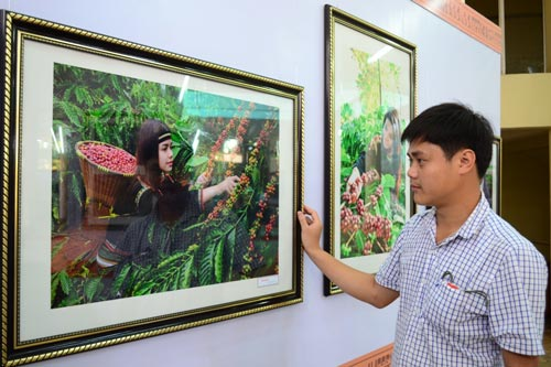 """Journey of Buon Ma Thuot Coffee"" photographic exhibition. (Photo:SGGP)"
