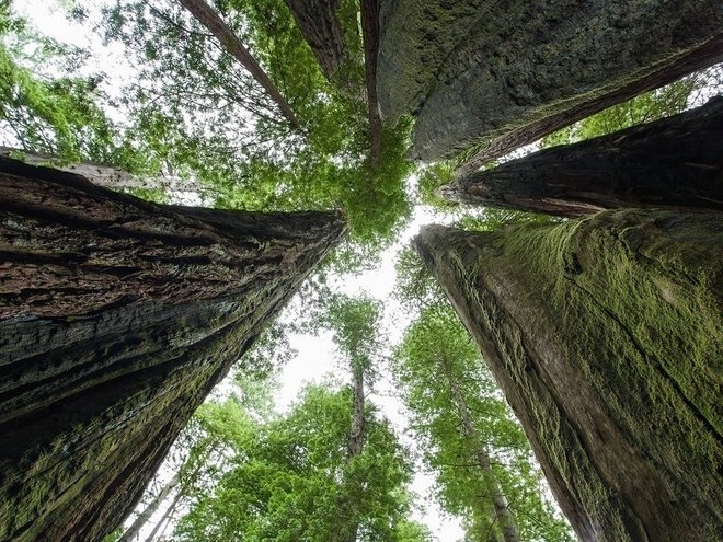 The Redwood National and State Parks of the US