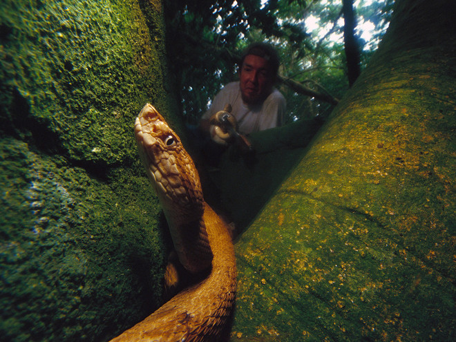Snake Island of Brazil