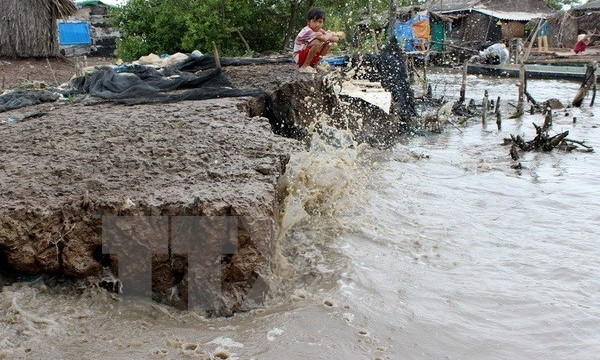 Part of the coastal system is in an extremely bad condition in Song Doc town, Tran Van Thoi district. Photo: VNA