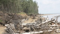 Coastal protection forest. (Photo: VNA)