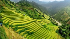 Rice terraces in the northern mountainous region of Vietnam (Photo:VNA)