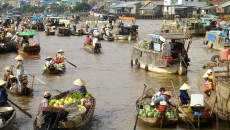 Boats full of fruit and vegetables head to Cai Rang floating market.