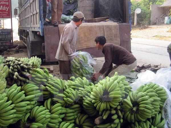 ttxvn_banana