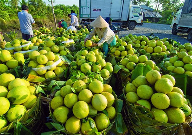 fruitexport