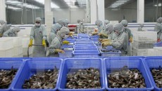 Vietnam_aquaculture_export_and_forum