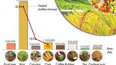 cultivation_export